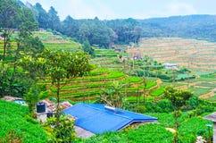 Agrotourism w Sri Lanka Zdjęcie Stock