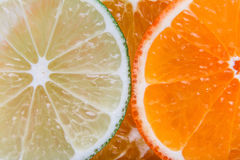 Agrume affettato: arance, mandarini, limoni, calce, tesoro, pompelmi, macro del primo piano della scopa della strega Fotografie Stock Libere da Diritti