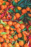 agrume Mandarini organici freschi in una scatola su esposizione ad un agricoltore Fotografia Stock