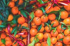 agrume Mandarini organici freschi in una scatola su esposizione ad un agricoltore Immagine Stock