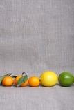 Agrume su tela di canapa Fotografie Stock Libere da Diritti