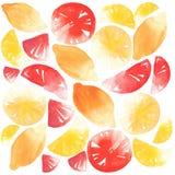 Agrumes coupés en tranches et citrons et aquarelle entiers de pamplemousse Photos stock