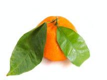 Agrumes de mandarine sur le fond blanc Image stock
