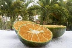 Agrumes rouges avec une peau verte sur un fond des palmiers macro Images stock