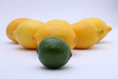 Agrumi: limetta e limone Immagini Stock
