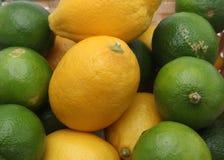 Agrumi: limetta e limone Fotografia Stock