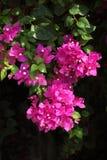 Agrupamento da flor Fotografia de Stock Royalty Free
