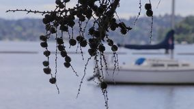 Agrupamento pequeno de cones do pinho com o veleiro no fundo vídeos de arquivo