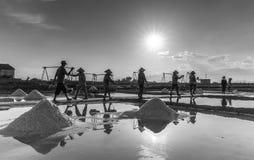 Agrupe a carga de sal dos fazendeiros de sal em bandejas de sal Foto de Stock Royalty Free