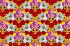 Agrupe grandes margaridas coloridas das flores no fundo amarelo Imagem de Stock