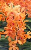 Agrupe las flores anaranjadas y amarillas de la orquídea con la hoja verde Imagen de archivo