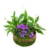 Agrupe los houseplants en un crisol adornado con el musgo. Fotografía de archivo libre de regalías