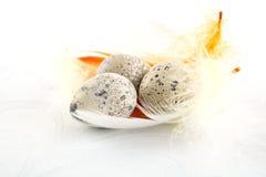 Agrupe ovos de codorniz de easter na toalha de mesa branca com penas Fotografia de Stock