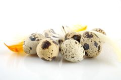 Agrupe ovos de codorniz de easter na toalha de mesa branca com penas Imagem de Stock Royalty Free