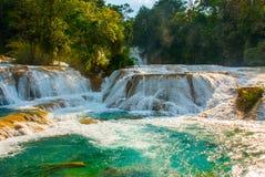 Agua Azul, Chiapas, Palenque, Meksyk Krajobraz na wspaniałej siklawie z turkusowym basenem otaczającym zielonymi drzewami Fotografia Stock