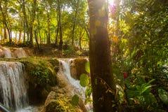 Agua Azul, Chiapas, Palenque, Meksyk Przez drzewnej przepustki słońca ` s promienie blisko siklawy Fotografia Stock