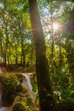 Agua Azul, Chiapas, Palenque, Meksyk Przez drzewnej przepustki słońca ` s promienie blisko siklawy Obrazy Royalty Free