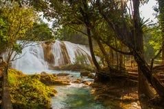 Agua Azul, Chiapas, Palenque, Meksyk Woda płynie przez skał Piękna siklawy sceneria w lesie Fotografia Royalty Free