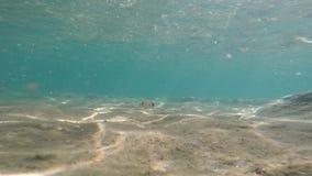 Agua azul clara con lecho marino de oro