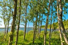 Agua azul en un lago del bosque con los árboles Fotos de archivo
