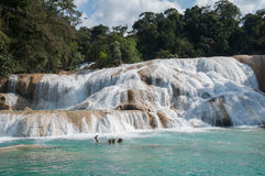 Agua Azul siklawy, Chiapas, Meksyk Zdjęcie Royalty Free