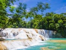 Agua Azul siklawy w tropikalnym lesie deszczowym Chiapas, Meksyk Zdjęcie Stock