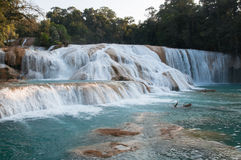 Agua Azul waterfalls, Chiapas, Mexico. Agua Azul waterfalls, Chiapas (Mexico stock photos