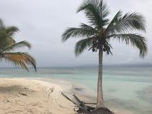 Agua azul y palmera tropicales San Blas Islands fotos de archivo