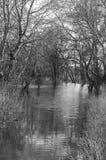 Agua bajo los árboles Foto de archivo libre de regalías