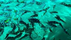 Agua clara Imagen de archivo libre de regalías