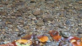 Agua clara de la corriente de la montaña que ondula sobre los guijarros metrajes