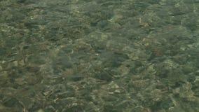 Agua clara del lago Lago Epuyen almacen de video