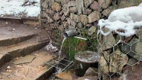 Agua clara en el invierno del bosque snowing almacen de metraje de vídeo