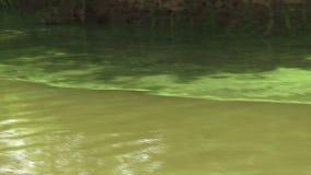 Agua con las algas verdes en el Amazonas almacen de video