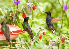Agua con Sugar Dispenser For Hummingbirds Fotos de archivo libres de regalías