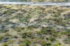 Agua contaminada Imágenes de archivo libres de regalías