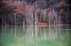 Agua contaminada del lago Imagen de archivo
