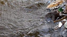 Agua contaminada en una corriente metrajes