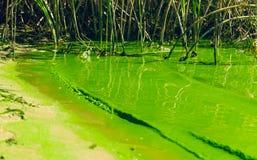 Agua contaminada Florecimiento estacional de diatomeas imagen de archivo