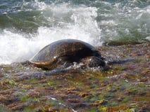 Agua contra la comida Triunfos de la tortuga imagenes de archivo