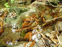 Agua cristalina Imagen de archivo libre de regalías
