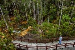 Agua cristalina en el bosque de la tierra baja cerca de Emerald Pool en el santuario de fauna de Khram de la Pra-explosión de Kha imagen de archivo