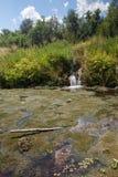 Agua cubierta de musgo del barranco americano de la bifurcación Fotografía de archivo libre de regalías
