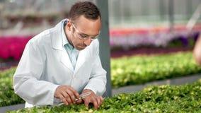 Agua de colada enfocada de la muestra del ingeniero de sexo masculino de la agricultura en la planta orgánica que sostiene el tub almacen de video