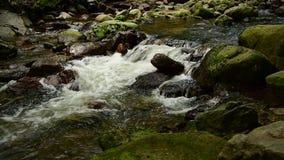 Agua de conexión en cascada de una corriente de la montaña en el bosque almacen de video