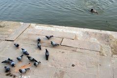 Agua de Ganges Fotos de archivo