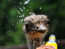 Agua de la bebida Imagen de archivo