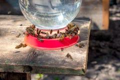 Agua de la bebida de las abejas Dispositivo para el agua potable en apiary_ Foto de archivo