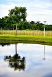 Agua de la calma del humedal de la reserva de naturaleza imagen de archivo libre de regalías
