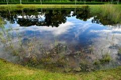 Agua de la calma del humedal de la reserva de naturaleza imagenes de archivo